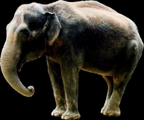 tubes_elephants_tiram_218