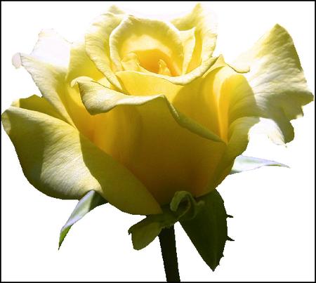 tubes_fleurs_tiram_766