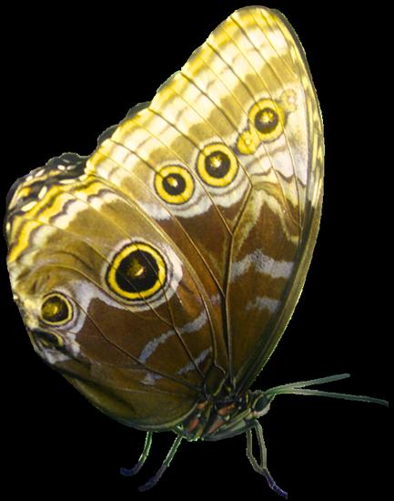 tubes_papillon_tiram_142