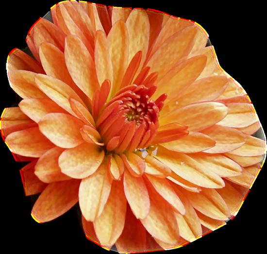 tubes_fleurs_tiram_376