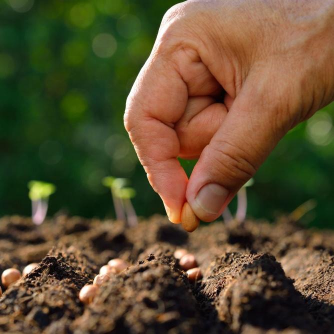 种子撒在泥土里(15.07.18)