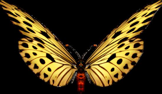 tubes_papillon_tiram_743