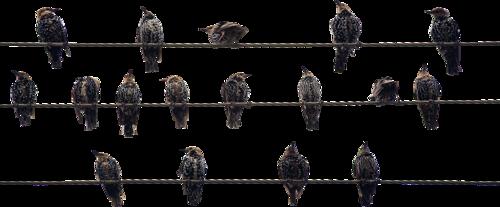 tubes_oiseaux_tiram_38
