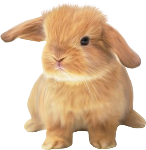 lapins_paques_tiram_682