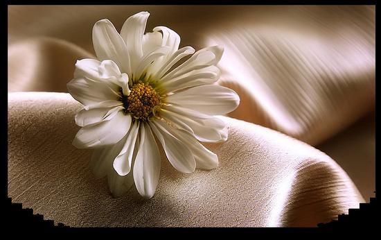 tubes_fleurs_tiram_385
