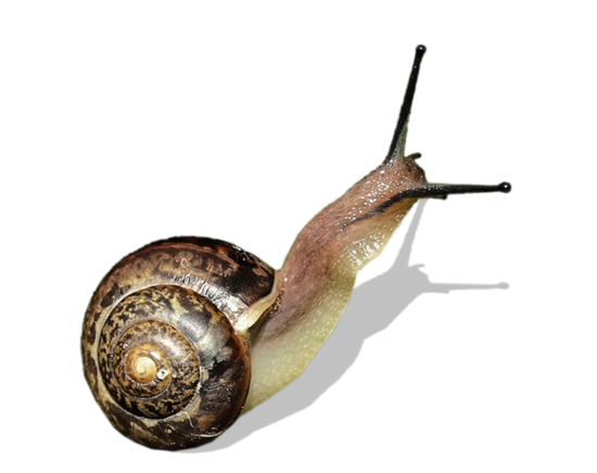tubes_escargots_tiram_138