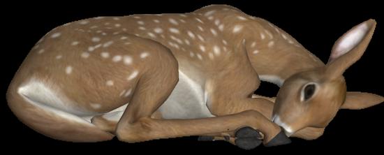 animaux-noel-tiram-62