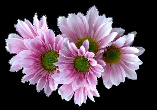 fleurs_paques_tiram_194