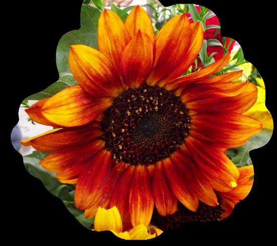 tubes_fleurs_tiram_67