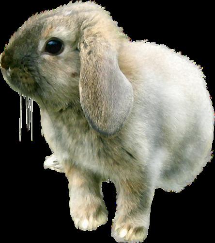 lapins_paques_tiram_44