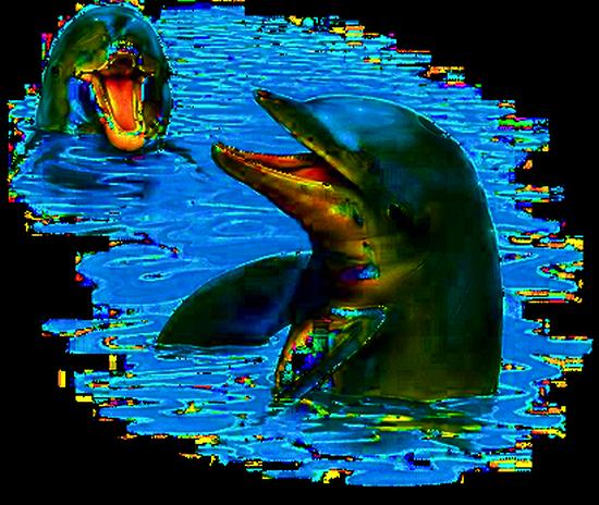 tubes_dauphins_tiram_122