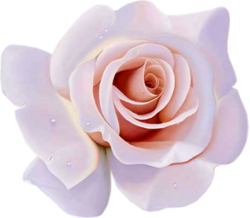 tubes_fleurs_saint_valentin_tiram_138