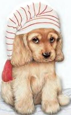 chien_tiram_418