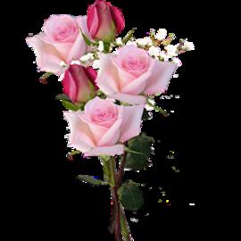 tubes_fleurs_saint_valentin_tiram_147
