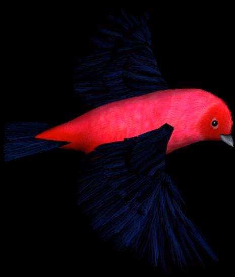 tubes_oiseaux_tiram_205
