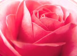 tubes_fleurs_saint_valentin_tiram_148