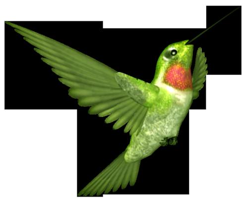 tubes_oiseaux_tiram_85