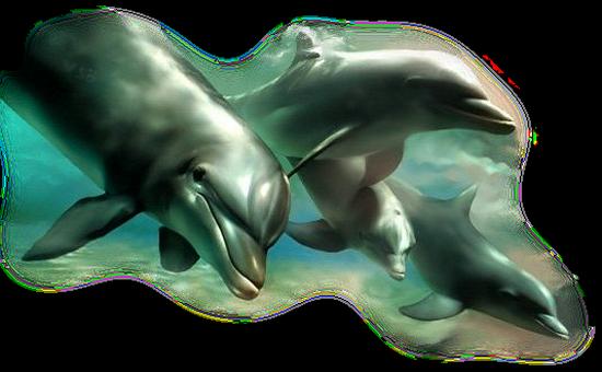 tubes_dauphins_tiram_63