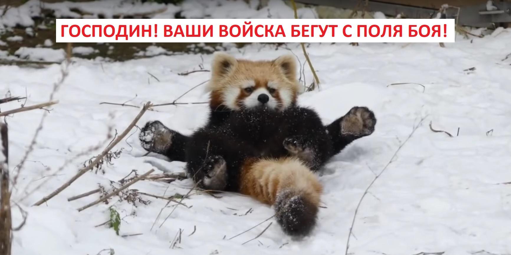 panda_Ren.jpg