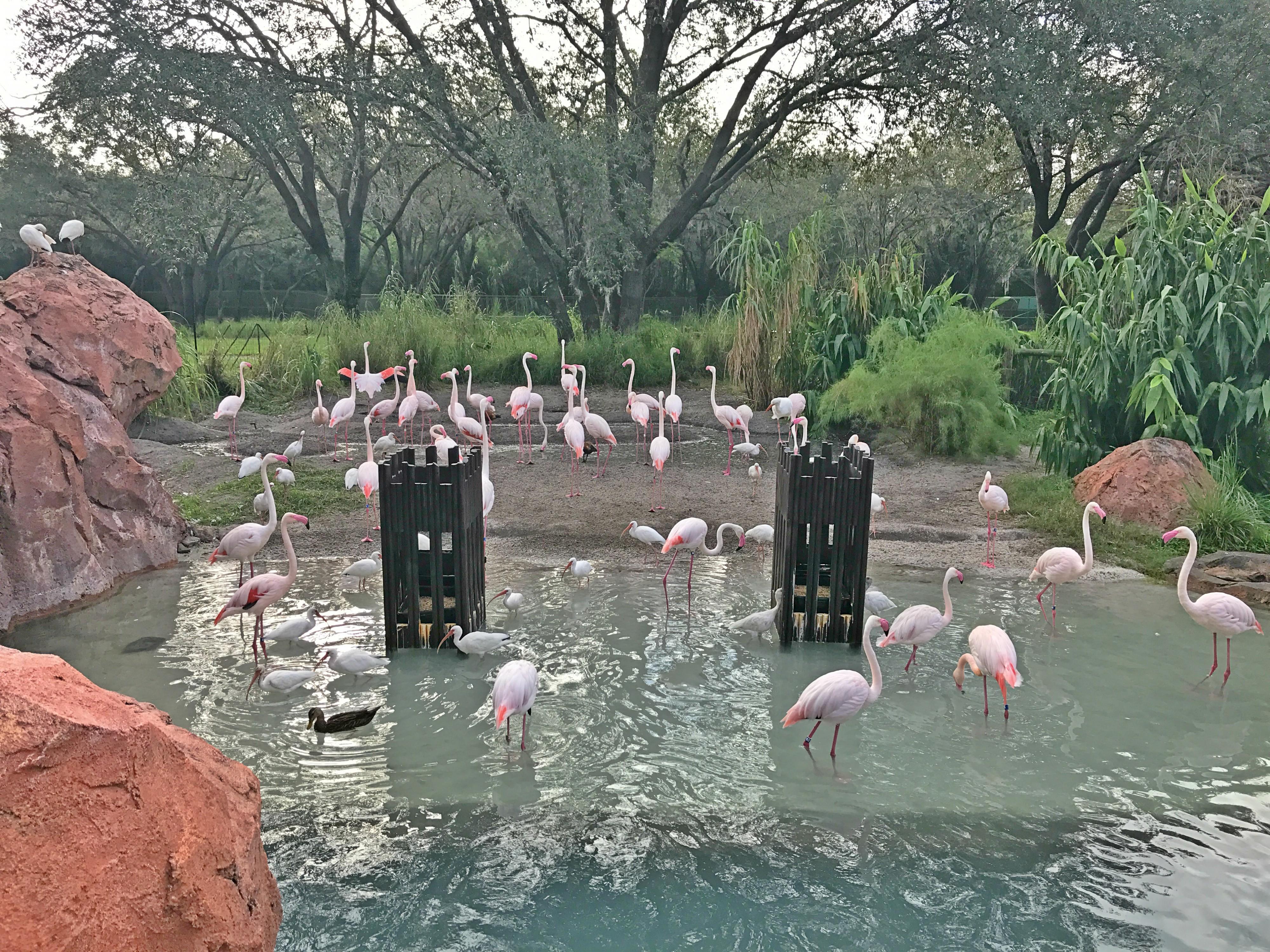Disney's Animal Kingdom Lodge Hotel Animals