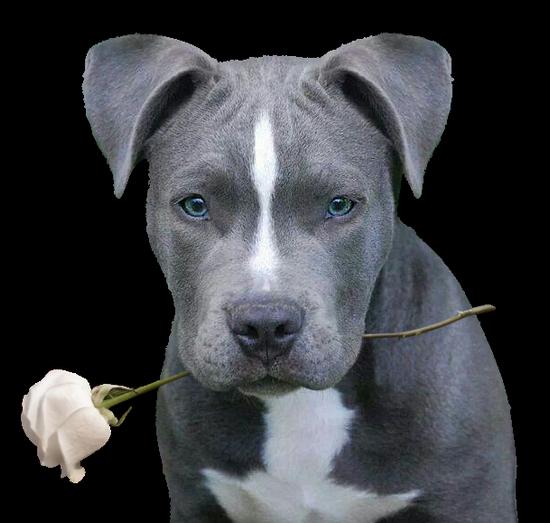 chien_tiram_156