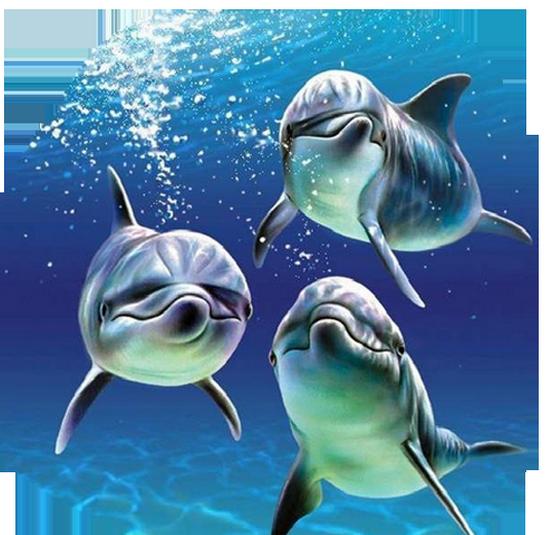 tubes_dauphins_tiram_170