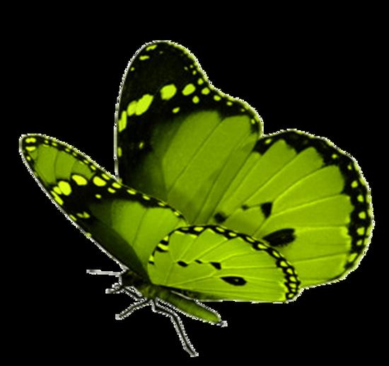 tubes_papillon_tiram_243