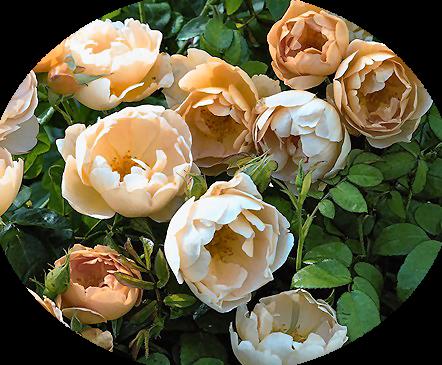 tubes_fleurs_tiram_947