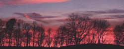 https://image.ibb.co/gBuRMo/439282_clouds_forest_nature_sunset.jpg
