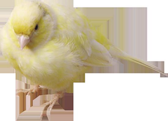 tubes_oiseaux_tiram_24