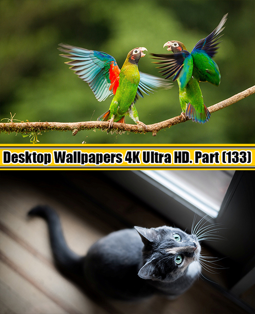 Deskop Wallpapers 4K Ultra HD. Part 133