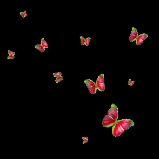 tubes_papillon_tiram_487