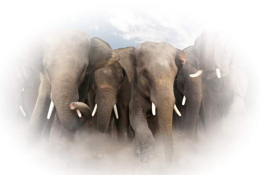 tubes_elephants_tiram_272