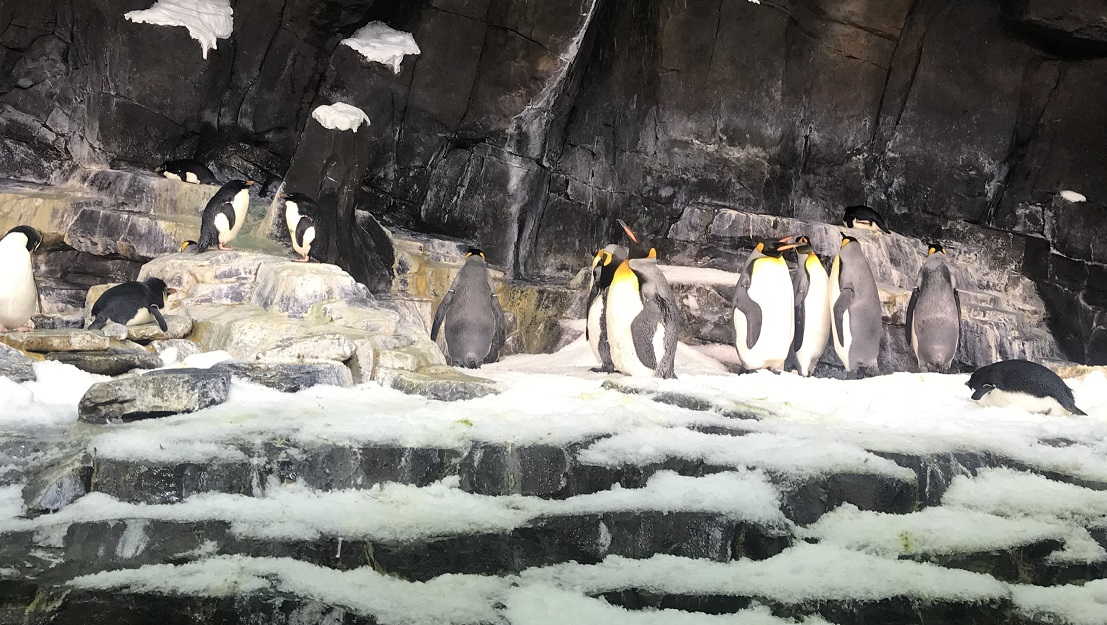Penguins up close tour at SeaWorld Orlando