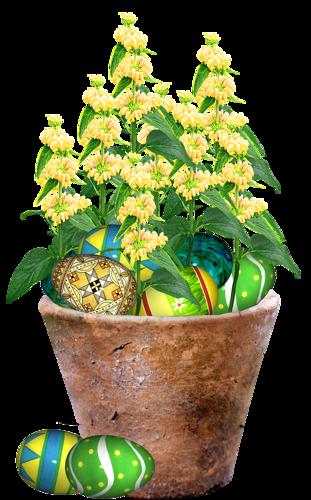 fleurs_paques_tiram_107