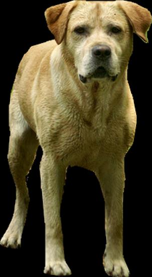 chien_tiram_112
