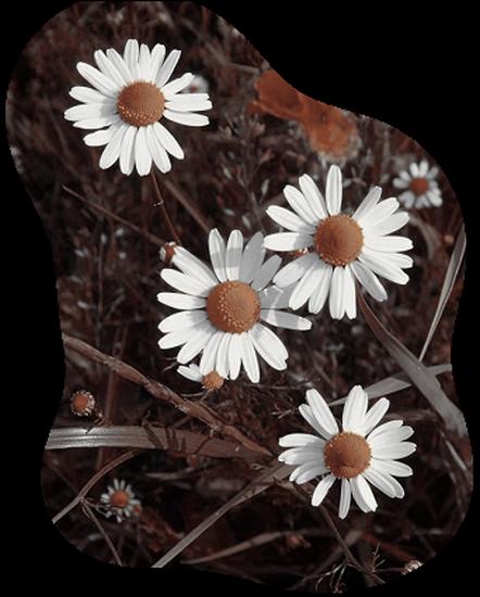 tubes_fleurs_tiram_309
