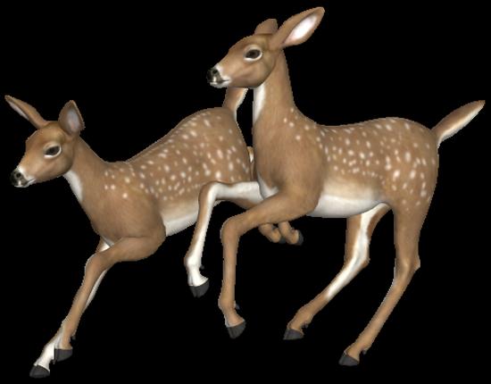 animaux-noel-tiram-66