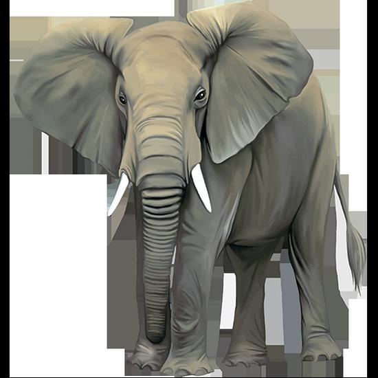 tubes_elephants_tiram_13