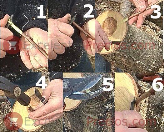 Pasos para realizar un injerto de corona, foto para ver como hacer el injerto de corona, explicación injerto