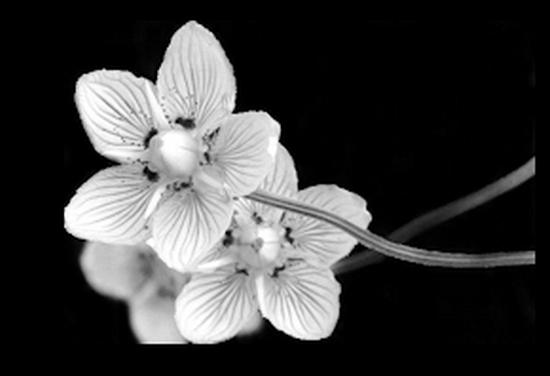 tubes_fleurs_tiram_3