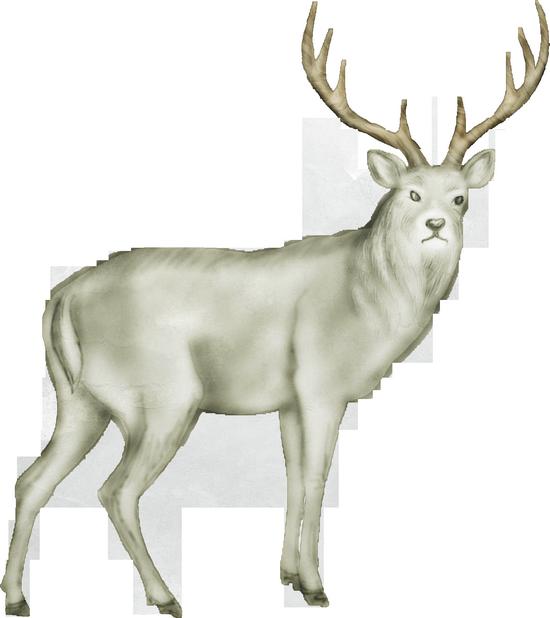 animaux-noel-tiram-78