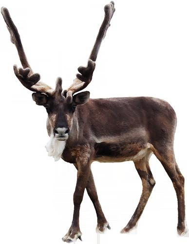 animaux-noel-tiram-627