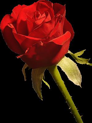 tubes_fleurs_saint_valentin_tiram_288