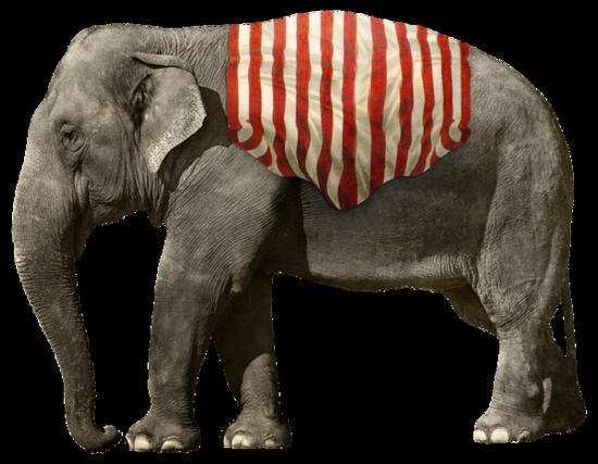 tubes_elephants_tiram_255