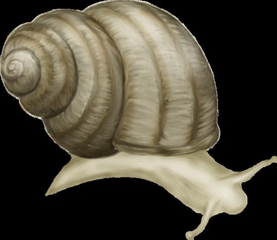 tubes_escargots_tiram_187