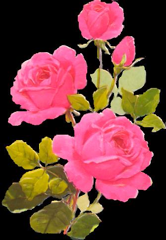 tubes_fleurs_tiram_771