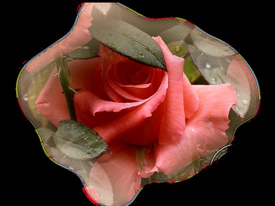 tubes_fleurs_tiram_492