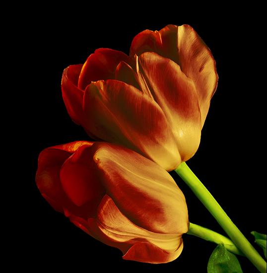 tubes_fleurs_tiram_273