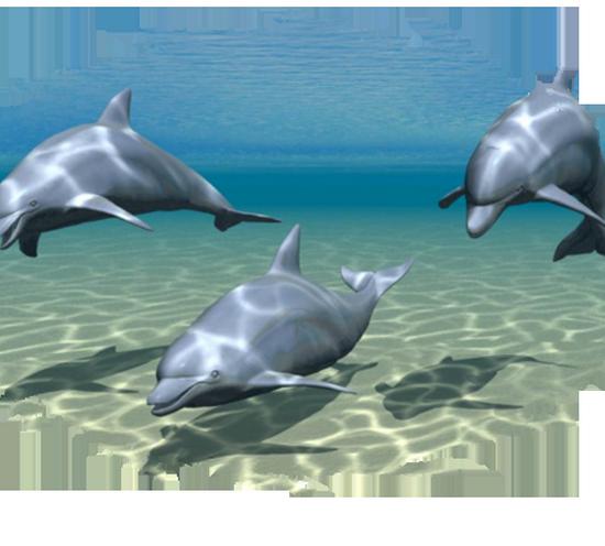 tubes_dauphins_tiram_193